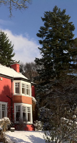 b & b Pitlochry - Our Douglas-fir